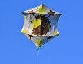 kite box