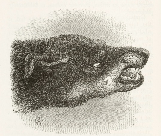 Snarling dog from Darwin's Expression of Emotions in Man and Animals, 1872.(Image Courtesy of The Wellcome Library, CC BY 4.0.)