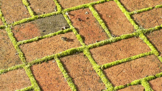 bricks and path